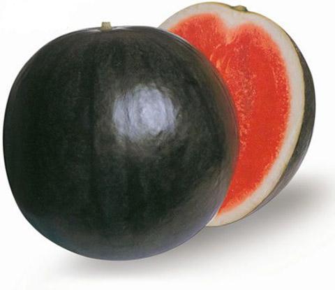 黑无籽西瓜-1